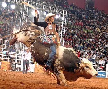 Brasil: Jueza sentencia prohibición de rodeos y espectáculos crueles en Paraná