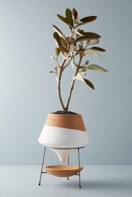 Wide Terracotta Pots