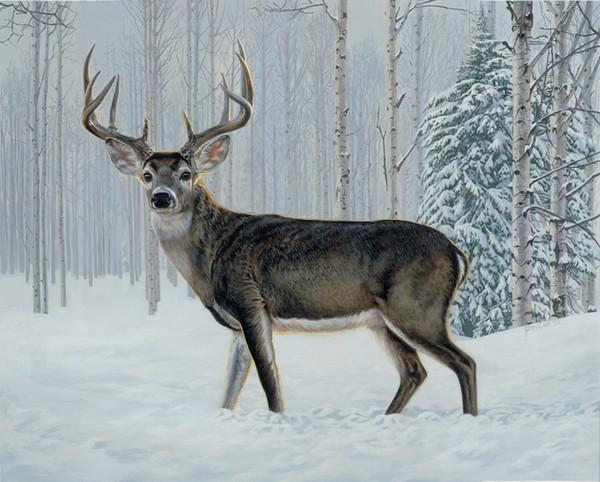 Winter Buck By Jon Ren