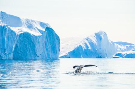 iceberg - Images et photos libres de droits - Stocklib