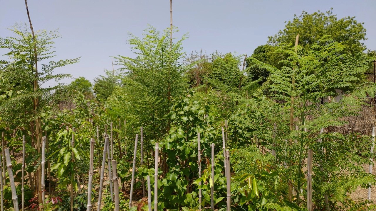 The healing power of forests: Bhopal Walmi Developed An Indigenous Organic Technique To Grow A Dense Forest On Barren Land