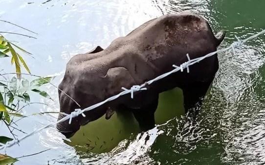 Animal Abuse: Pregnant Elephant in Kerala Dies Eating Firecracker ...