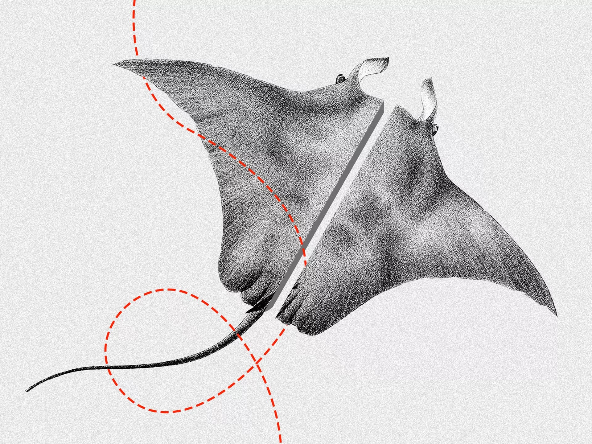 Bat Ray Diagram