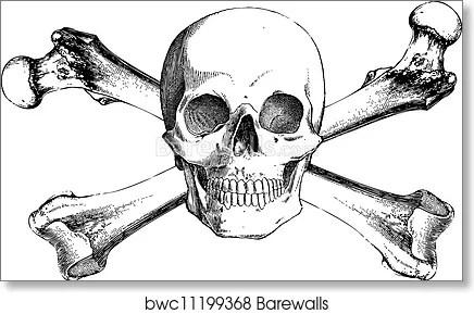 Vector Vintage Skull And Cross Bones Art Print Barewalls Posters Prints Bwc11199368