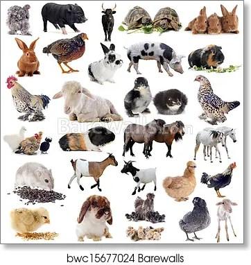 farm animals art print poster