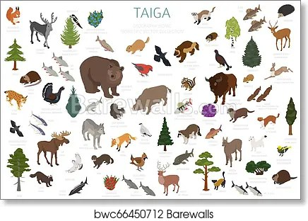 The taiga is in the north part of the world. Taiga Biome Boreal Snow Forest 3d Isometry Design Terrestrial Ecosystem World Map Animals Birds Fish And Plants Infographic Element Art Print Barewalls Posters Prints Bwc66450712