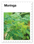 Moringa – Nutrient-rich Superfood with Phytonutrients