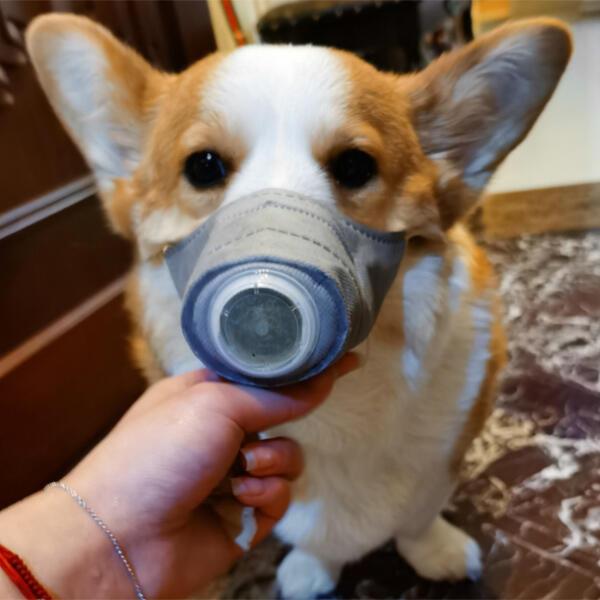 3 Pieces/Set Anti-Dust Dog Face Mask
