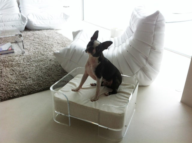 Ralph Marks Perspex Acrylic Furniture UK Acrylic Dog