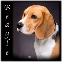 Family Tree Imaging Beagles