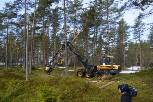 Climate change looms over future of Finnish forestry industry