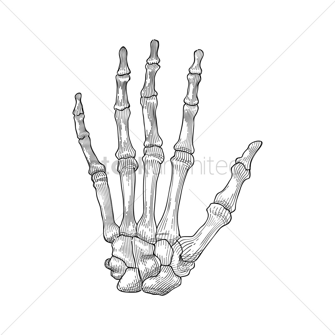 Skeleton Hand Vector Image
