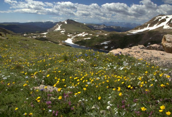 Bears-peaks-flowers-use-001