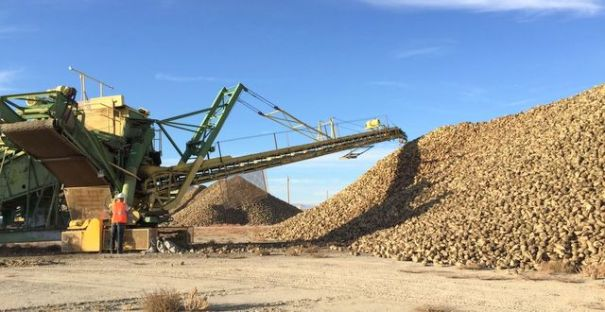 At the Sugar Beet Harvest, your job will be aiding in making the huge piles of beets.
