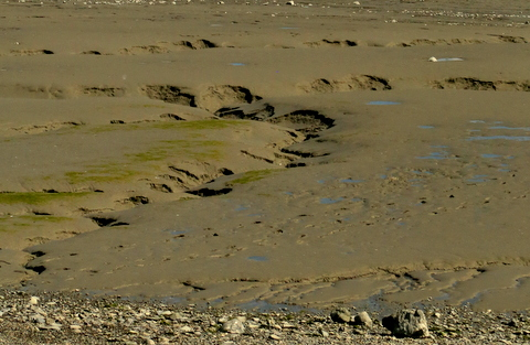 I took this close-up of the mudflats last week. If you look closely at the bottom right corner, you can see footprints where somebody just had to risk their lives on the mudflats.
