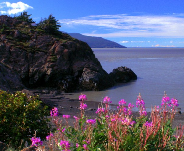 In this shot from 2006 the tide is mostly in and the fireweed is in bloom. I's just now starting to bloom on this trip.