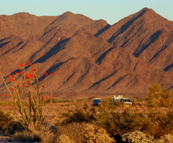 I took this shot the day before we left Ehrenberg. I think these were the best Ocotillo blooms I've ever seen.