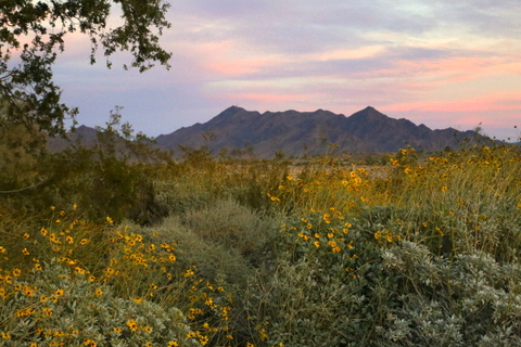 It was also an exceptional year for Brittlebush in Ehrenberg,