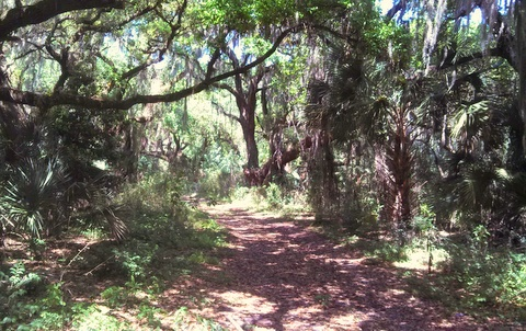 Hiking path near Hickory Hammock campground.
