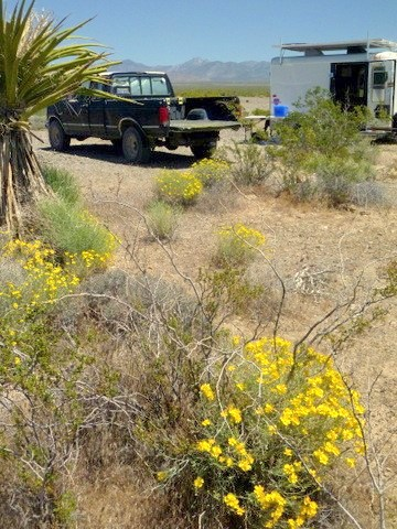 I took this photo in Pahrump in April of 2011 when the spring bloom was on. Pahrump can be very pretty in the spring!