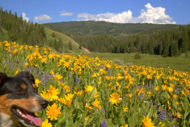 Cody must be jealous of wildflowers, he want to be in their pictures!