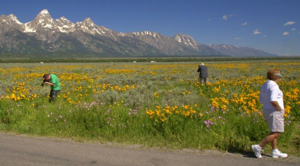 """This is a """"behind-the-scenes"""" look at the above picture. Whenever there's a field of wildflowers (or group pf animals) you'll find a group of photographers shooting them."""