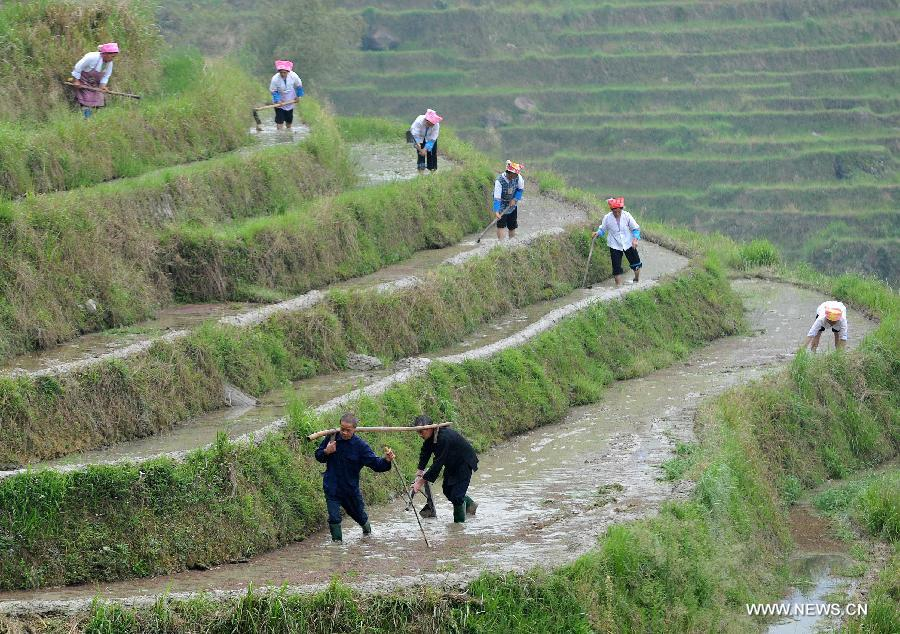 Image results for terrace farming in china