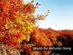 Beijing Weather in November  Dress Advice and Things to Do in     Top 5 Places to Visit in Fall Autumn in China