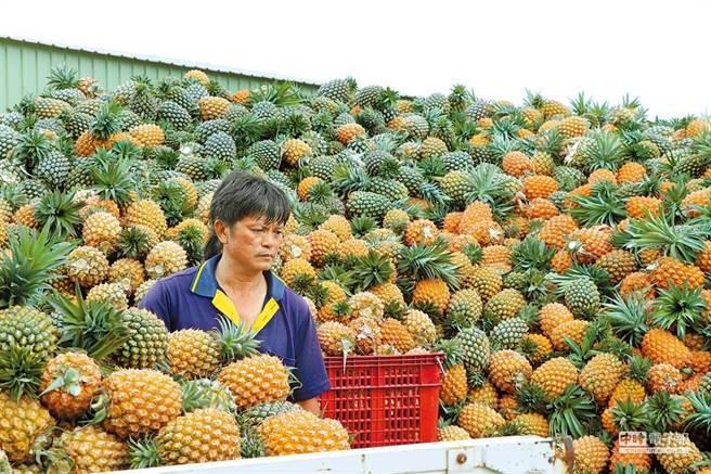 图为一个菠萝农。  (图片/这张报纸的照片)