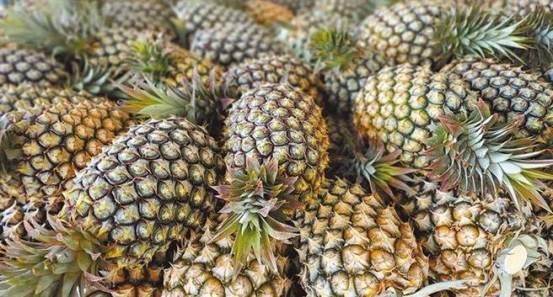 [Tormenta de piña]民进党退伍军人承认台湾禁菠萝后的一件事-政治-中国时报