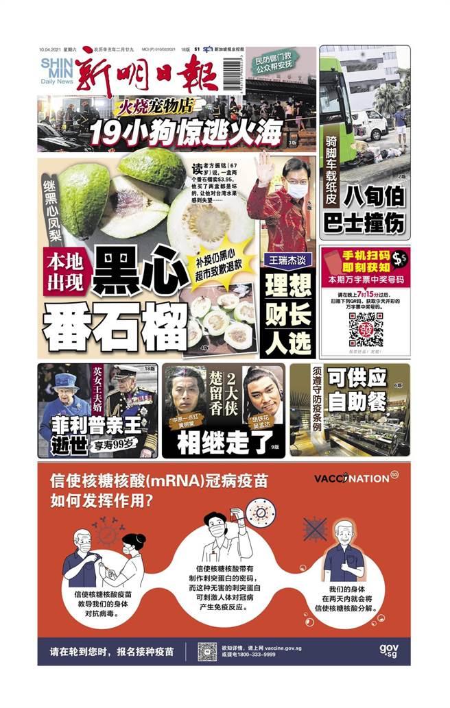新加坡《新民日报》报道说,黑心台湾番石榴出现在那儿。  (照片/从《新明日报》 Facebook获得)
