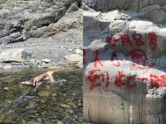 "Dan Daye Creek震惊地看到现场喷洒了红色油漆的8个无头的水鹿尸体,""在这里参观"",人们感到愤怒-Society-China Times News"