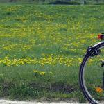 Radfahrer, Den Radfahrern