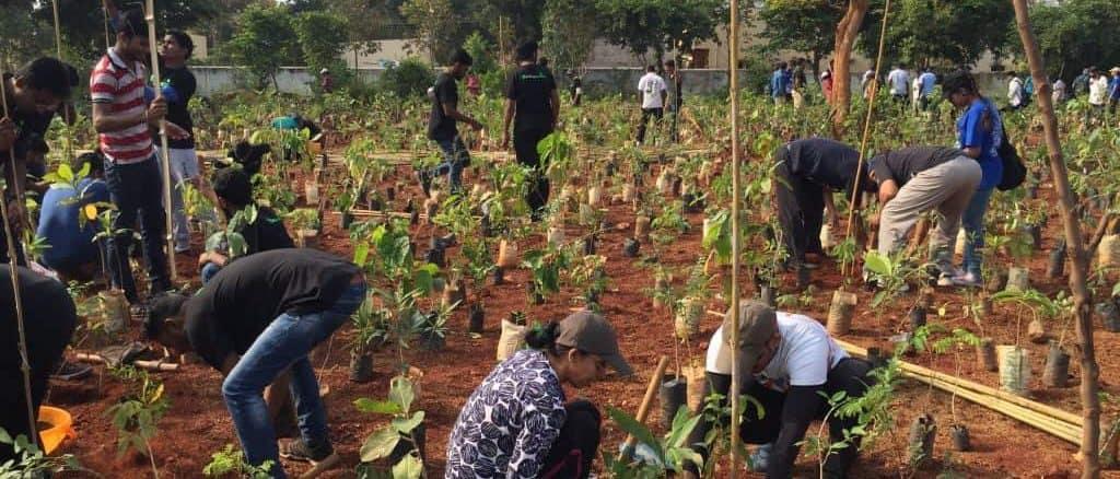 Maruvan is an ambitious project; How To Make A Mini Forest With Miyawaki Method Citizen Matters Bengaluru