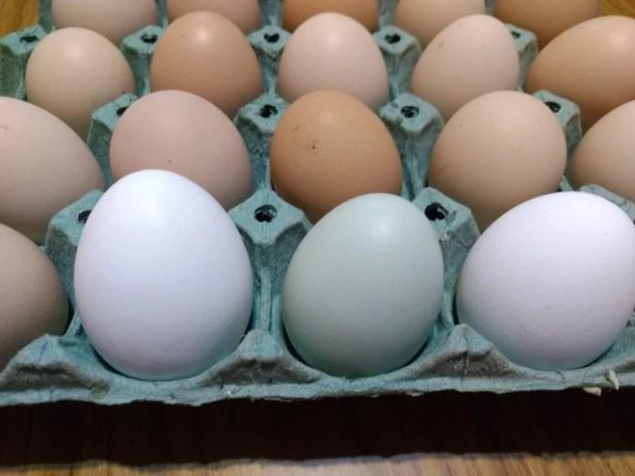 Huevos de distintos colores, todos son ricos en proteínas