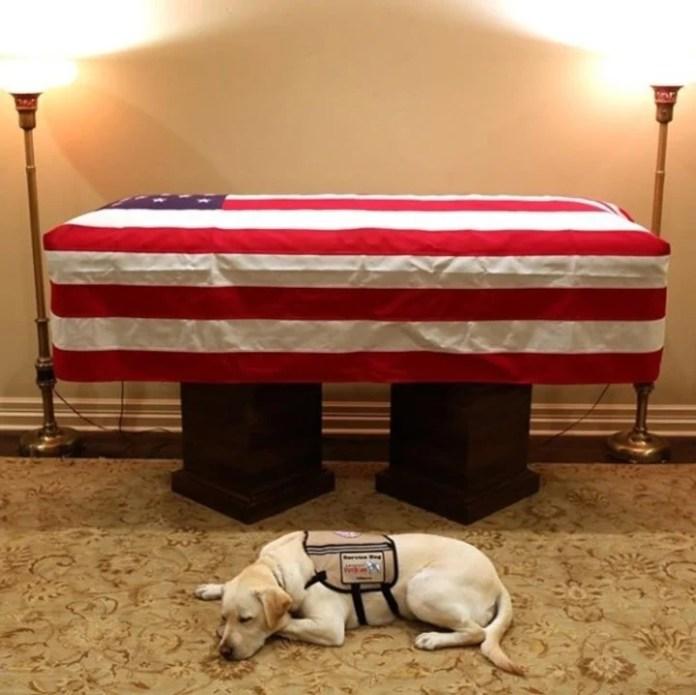 La emotiva foto del perro del ex presidente George H.W. Bush resguardando su ataúd La imagen conmovió a todos desde que se publicó en las redes sociales del animal de servicio. (Foto: Instagram sullyhwbush)