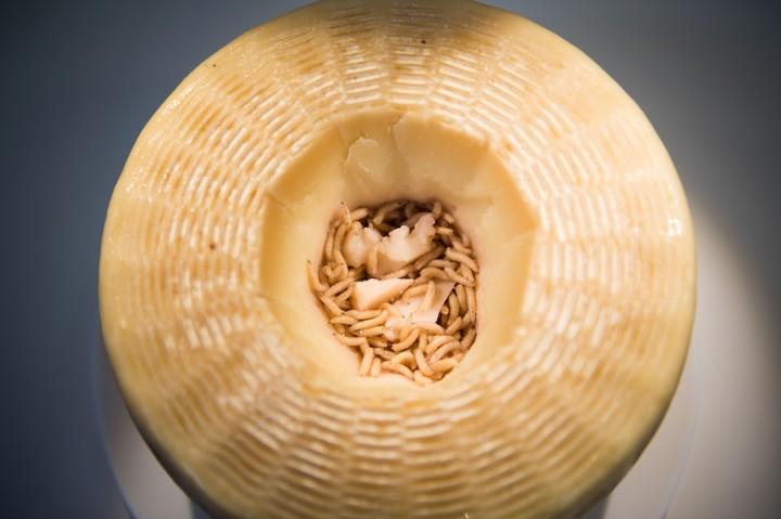 Casu Marzu. Un queso de Cerdeña. Foto/AFP