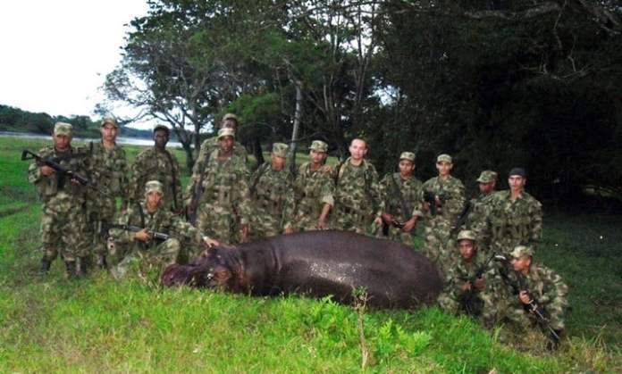 Imagen de 2009. Soldados colombianos posan junto a un hipopótamo, muerto tras escapar de la hacienda Nápoles. / Archivo