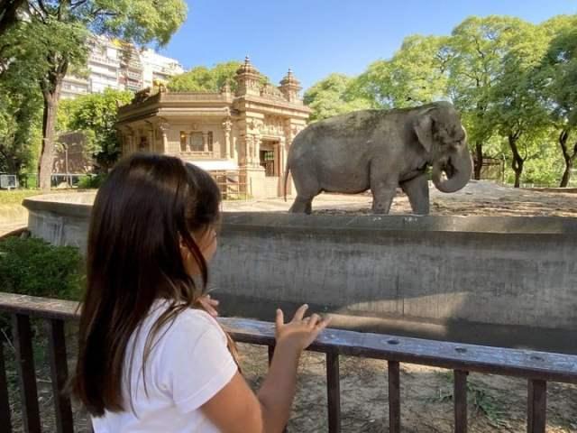 La elefanta Mara sigue con la cuarentena que había comenzado para concretar su traslado. FOTO JUAN MANUEL FOGLIA