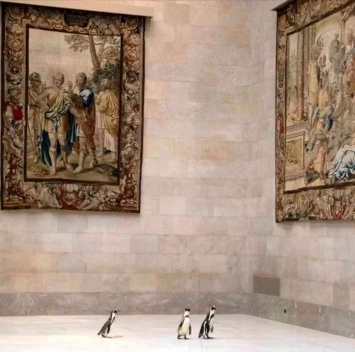 Los 3 pinguinos son de la especie Humboldt, originarios de Perú. (Foto: The Nelson-Atkins Museum of Art)