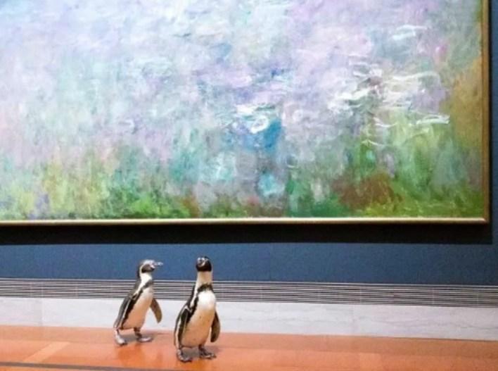 Los pingüinos comenzaron viendo pinturas de Monet. (Foto: The Nelson-Atkins Museum of Art)