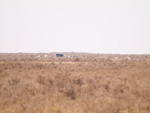 Peritos en el lugar donde hallaron un cuerpo en un canal cerca de Bahía Blanca. /Pablo Presti