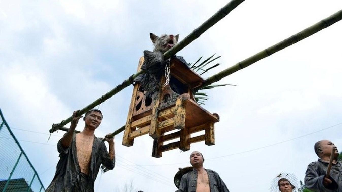 """En una aldea de China también se celebra el """"Día del perro"""", vestidos con ropa humana y exhibidos en un trono."""