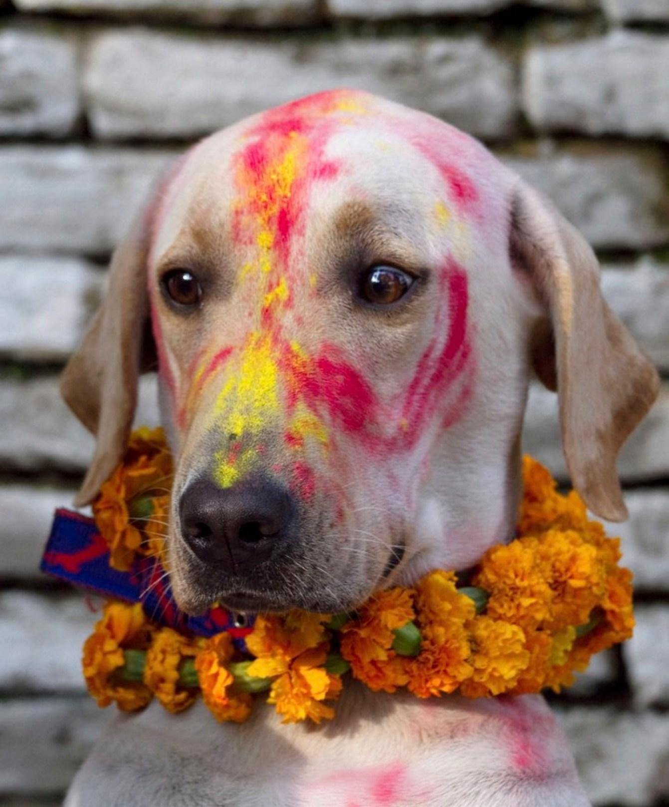 Los perros son bañados, adornados y se les ofrece comida durante todo el día.