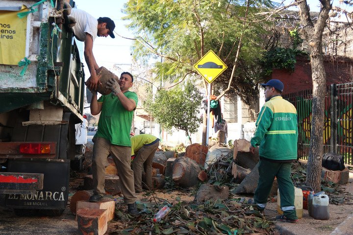 Operators of the City Government remove the last remains of a centennial rubber tree that they removed in Villa Crespo.  Photo: Juano Tesone
