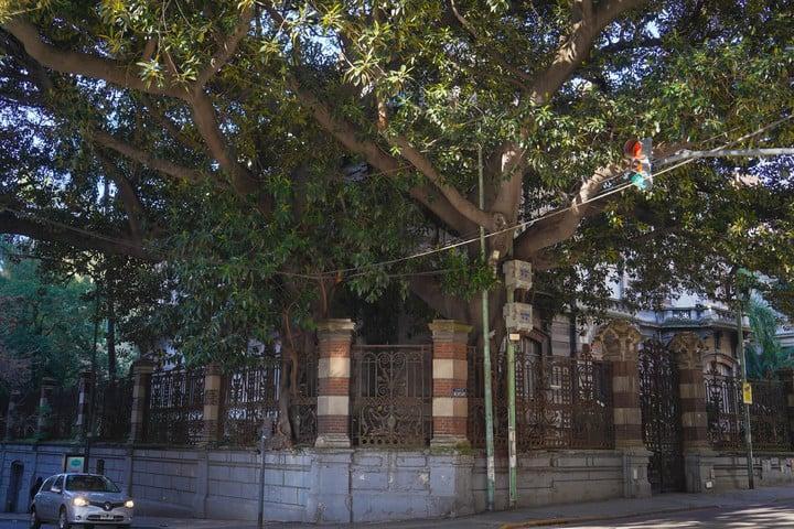 The gomero of the old Hume residence.  Photo Rafael Mario Quinteros