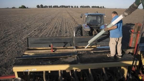 Desde el INTA, aseguran que hay una alta respuesta en los rindes a la fertilización con fósforo y azufre.
