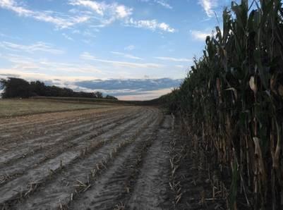 Sumar más gramíneas a la rotación, como el maíz, es fundamental para recuperar materia orgánica, aseguran desde la UNL y el INTA.