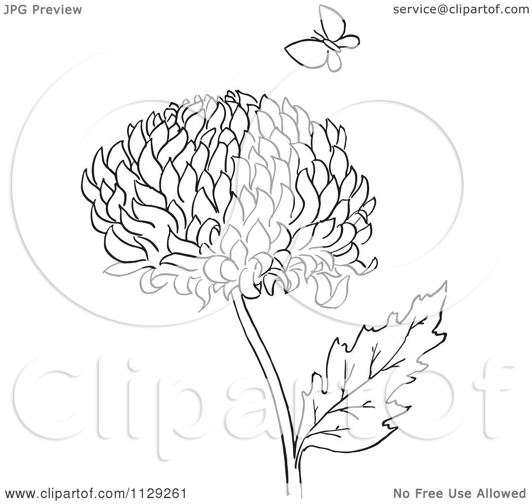 Cartoon Clipart Of An Outlined Chrysanthemum Flower And Butterfly