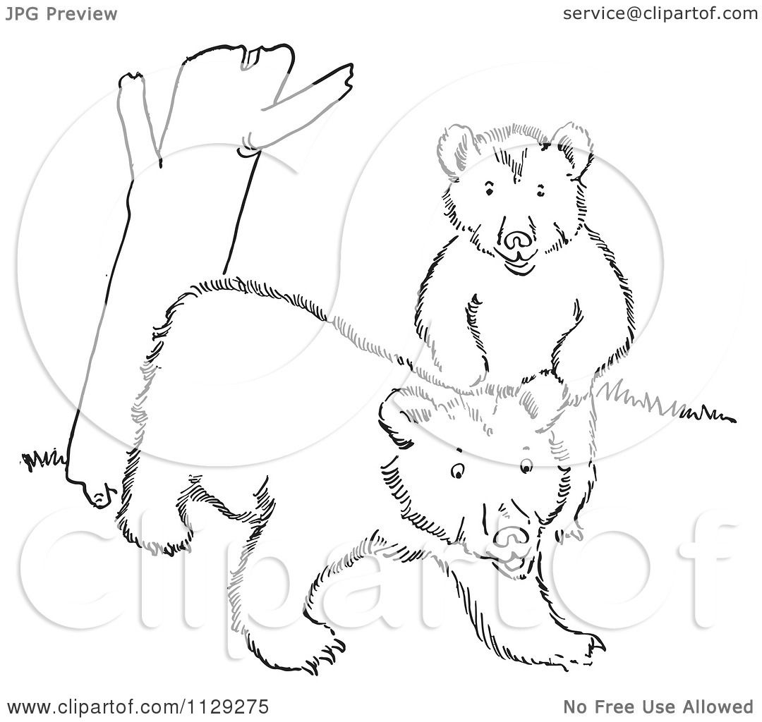 Cartoon Clipart Of Outlined Playful Bear Cubs By A Tree
